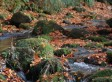 Autumn Colours at Larch Hill